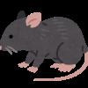 【衝撃】渋谷のファミマさん、ネズミが大量発生してしまう(動画あり)